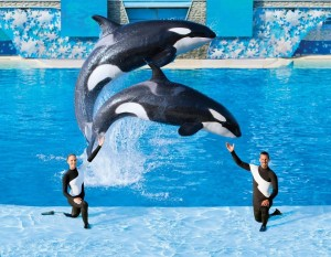 sea-world-orlando-shamu