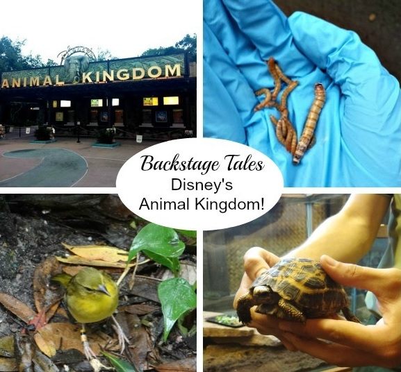 disney animal kingdom tour